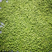 China IQF Green Soybeans / Frozen Soy Bean Kernels for sale