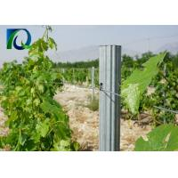 Agricultural Outdoor Tomato Trellis System , Steel Garden Post 1.8MM X 2.5M for sale