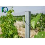 Q235 Steel Galvanized Orchard Trellis Systems For Grape / Fruits Customized Length for sale