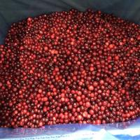 China BRC Certified Rich In Vitamin C 100% IQF Frozen Sweet Wild/Cultivated Lingonberry Cowberry From China for sale