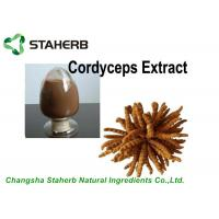 China Antibacterial Cordyceps Extract 10%-40% Polysaccharides Powder By HPLC supplier