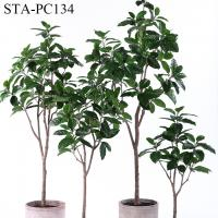 Low - Maintance Artificial Rubber Tree Evergreen Plant Modern Lifestyle for sale