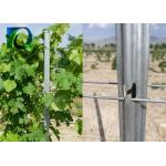 C - Shaped Plant Support Posts Galvanized Steel Trellising Custom Made for sale