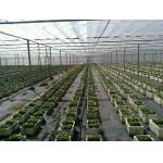 China Mothproof Agriculture Non Woven Fabric For Vegetable Protect Durable for sale