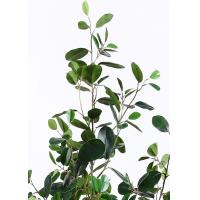 China Lush Leaves 6 Ft Artificial Ficus Tree , Fake Fiddle Leaf Fig Tree Delightful Impression supplier