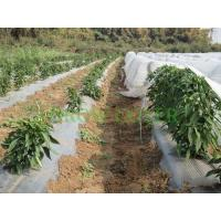 China Landscaping Agriculture Non Woven Fabric / Recycled Polypropylene Fabric for sale