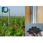 Agricultural Vineyard Grape Pole Plant Support Posts N Shape Holes Size 2.0MM x 2.4M for sale