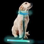 China Custom Popular Large LED Dog Collar , Flashing Long Dog Leash For Pet Walk for sale