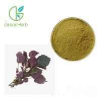 China Factory Supply 20:1 Perilla Leaf Extract Folium Perillae Extract / Perilla Leaf Powder for sale