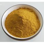 Organic Turmeric Plant Extract Powder Curcuma Longa Root Extract For Pigments for sale